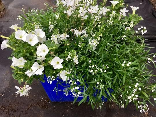 Creemore Planters