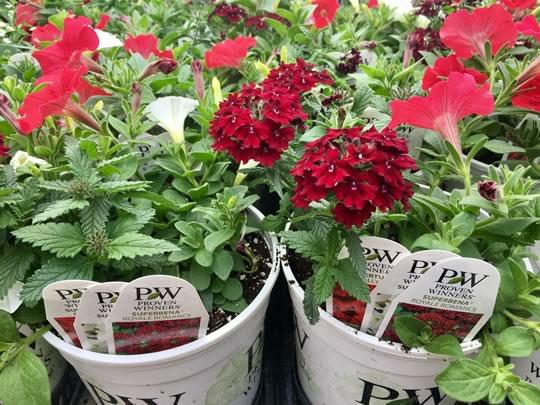 Instant Garden Pots
