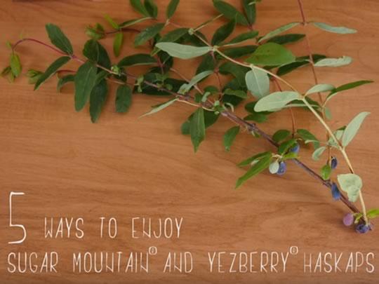 5 ways to enjoy Sugar Mountain or Yezberry Haskaps