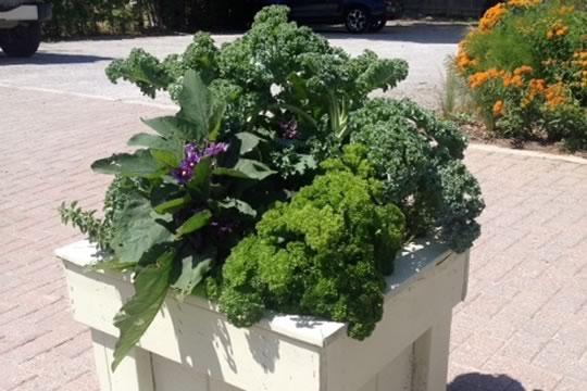 Creemore Container Veggie Combo