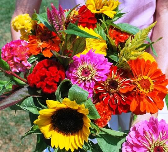 Cut Flower Transplants