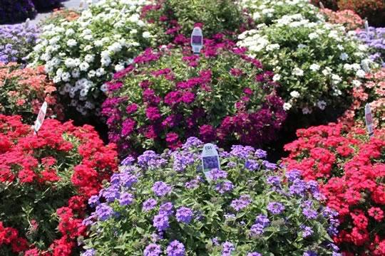 Fertilize your annuals